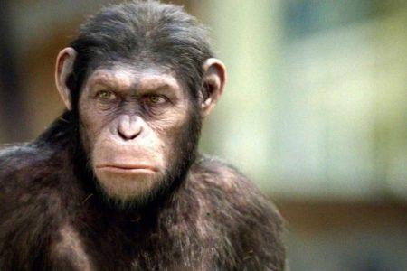 La muerte de dos Simios de la Selva Tropical